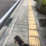 マレーシアに歩くための道があるか?