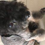 犬の散髪・Kuan Pet Salon@Kuchai Lama