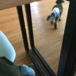 犬にガンが見つかる12@マレーシア