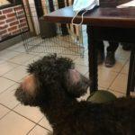 犬にガンが見つかる15@マレーシア