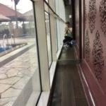 犬にガンが見つかる25@マレーシア