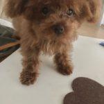 新しく犬を飼い始める8@マレーシア